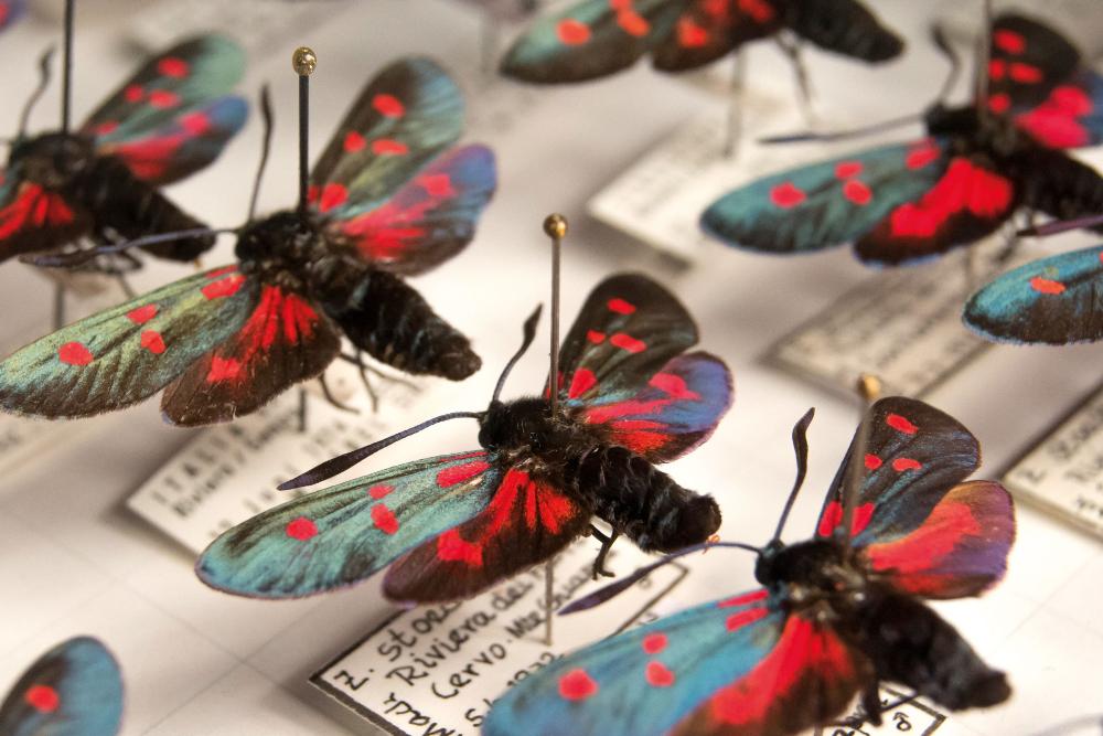 Ausstellung Naturkundemuseum